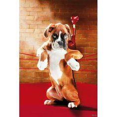 Boxer :)