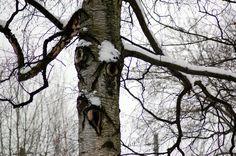 Portfolio Multimedeia: Noidanpuu huutaa