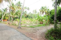 Land for sale in  Cherthala town , Alappuzha , Kerala - SICHERMOVE.COM   1.5 ACRE LAND AT CHERTHALA TOWN (INCLUDING KOCHI METRO CITY) WITH 120 M. TAR ROAD FRONTAGE & 2nd PLOT FROM 4 LINE NH47   NOW SALE @ 2.5 LAKHS/CENT