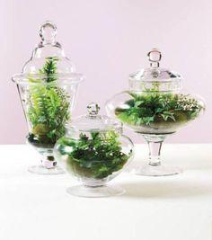 Awesome Bonsai Terrarium On The Jars 16