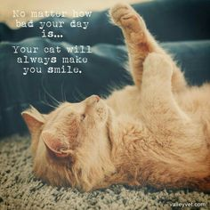 Pets •~• No matter how bad your day is... Your cat will always make you smile.