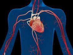 Bei vielen Menschen arbeitet das Herz tadellos – das ganze Leben lang. Manchmal kann es jedoch zu Erkrankungen kommen. Doch diese lassen sich oft verhindern.