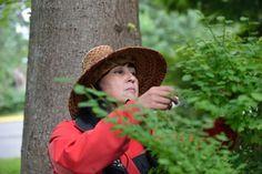 Takaya Tours: Rainforest Walking Tour