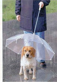 Dogbrella - When walking outside with your dog it is of the utmost importance that your pooch stay dry but it doesn't matter whether you get wet. An inverse umbrella one points downwards towards your dog. With a Dogbrella your pooch will stay dry. Or, at least it maybe would stay dry if your dog walked right next to you. And if the cord inside the Dogbrella attached to your dog's collar (as shown in the photo); as it is, the cord has no clip to make this attachment.
