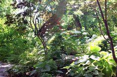 Creating our shade garden