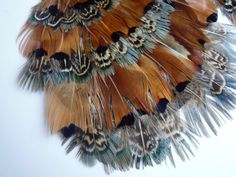 FEATHER PADS  Pheasant Feathers all Natural Not Dyed / 86