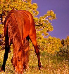A Chile' Purple Sky by Montana Horse Trailers