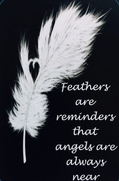 And a feather has appeared. November I am thankful for guardian angels and the loved ones they have protected. Have you ever had an angel experience? November Quotes, November 23, Angeles, I Believe In Angels, Ange Demon, Angels Among Us, Feather Tattoos, Feather Quotes, Dandelion Tattoos
