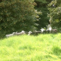 How many Herdies do you see? (Thanks to Lizzy Wilcock for the pic!)