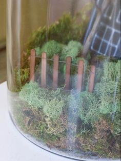To create a spooky Halloween terrarium, cover the bottom in moss. Cut a haunted…