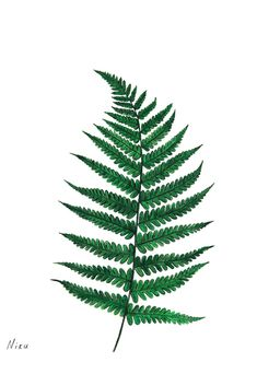 Fern Leaf Illustration                                                                                                                                                                                 More