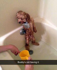 Dog refusing to bathe