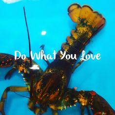 Lobster love!