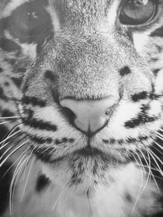 little tiger face