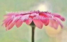 Engelen om hulp vragen | Tips om de engelen te vragen om hun hulp! Happy Life, Chakra, Angels, Rose, Flowers, Universe, The Happy Life, Pink, Angel