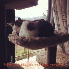 Pierre #cat