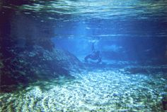 Rock Springs (in Apopka) has to be the best place in Florida to go tubing. DeLeon or Blue Springs is better for swimming. Rock Springs, Florida Springs, Blue Springs, Best Places In Florida, Kelly Park, The Good Place, Northern Lights, Aquarium, To Go