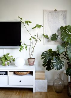 Bring your living room to life with indoor plants of all shapes and sizes #IKEAIDEAS