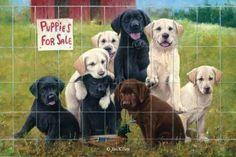 Jim Killen Original Paintings Sporting Dog, Waterfowl, Upland Game and Wildlife Art 6