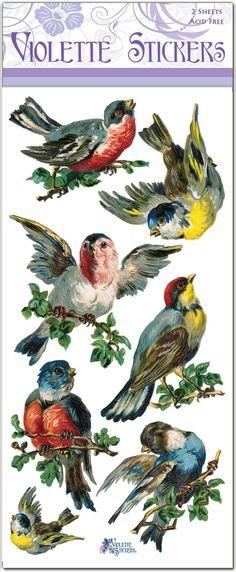 C52-Songbirds