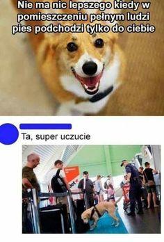 Es gibt nichts schöneres, als wenn der Hund sich dafür. Meme Comics, Memes Humor, Wtf Funny, Funny Jokes, Polish Memes, Funny Mems, Funny Dog Videos, Grumpy Cat, Reaction Pictures