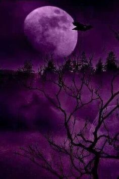 Purple moonlight...