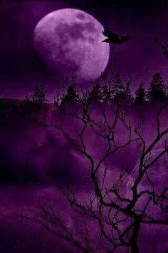 Purple moonlight...