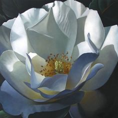 """Rose 18x18"" - Original Fine Art for Sale - © M Collier"