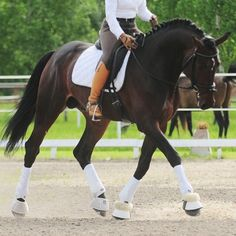 dressageworkingstudent:Gimme