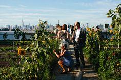 Brooklyn Grange rooftop garden/s