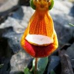 Flower Art | Dusky's Wonders