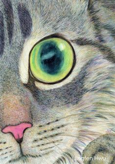 grey striped cat face drawing - you found me - realistic watercolor pencil artwork by JingfenHwu