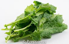 Turnip Green - Search by flavors, find similar varieties and discover new uses for ingredients @ preppings.com