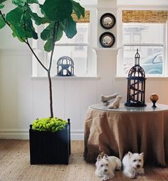 The Sill store delivers easy-care plants to your door. The definitive guide to easy, indoor plants | Gallery | Glo