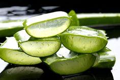 Beneficios, usos y propiedades curativas de la planta Aloe vera (Sábila)