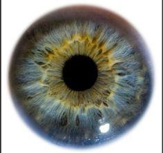 Samsung quiere lectores de iris en sus smartphones | NOTICIAS AL TIEMPO