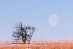 Full moon in daylight and a damaged tree by fire in the Hautes Fagnes region of Belgium