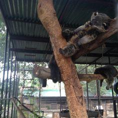 Explore the animal world at Crocolandia in Biasong, Talisay City, Cebu, Philippines. Managed by the Crocolandia Foundation, Inc. Crocodiles, Palawan, Places Of Interest, Cebu, Philippines, Marvel, Crocodile, Cebu City, Men's Fitness Tips