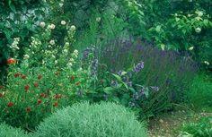 garten-groene.de :: Garten Gröne :: Sommer in der Sonne :: de. Centranthus / Valerian (white)