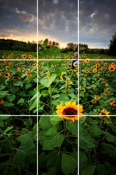 this an an example of rule of thirds because the focus is on the flowers and 1/3 of it is the sky The hot spot in this photo would be the flower where the two lines intersect each other