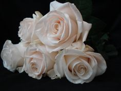 http://writerfox.hubpages.com/hub/Free-Pictures-of-Roses