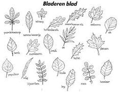 Afbeeldingsresultaat voor bomen met bladeren tekenen Class Tree, Bujo Doodles, Cool Coloring Pages, Botanical Drawings, Girls Camp, Autumn Activities, Fauna, Summer Art, Art For Kids
