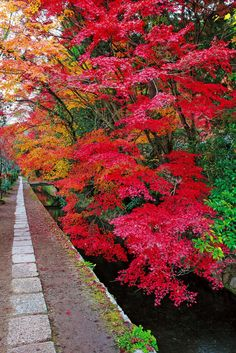 Autumn at the Philosopher's Walk in Eastern Kyoto, Photograph by Mizuno Hidehiko