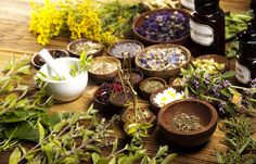 Top Medicinal Herbs To Grow At Home Homesteading Tips   20 Garden Tips And Hacks That Will Help You Become a Gardening Expert