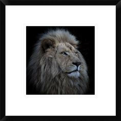 Global Gallery, Louise Wolbers 'Proud Lion' Framed Giclee Print