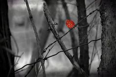 Red Leaf Stuck by Denise Irving
