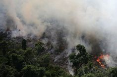 The rainforest is burning amid increasing deforestation by farmers and ranchers. Amazon Rainforest Deforestation, Brazil Amazon Rainforest, Brazilian Rainforest, Missouri, Xingu, New Forest, Global Warming, Aerial View, Biomes