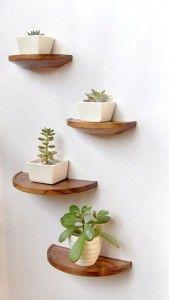 Plantas pequeñas en estantes