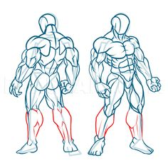 How To Draw Muscles, Step by Step, Drawing Guide, by KingTutorial | dragoart.com Body Reference Drawing, Human Figure Drawing, Guy Drawing, Drawing Base, Art Reference Poses, Drawing Guide, Drawing Lessons, How To Draw Muscles, How To Draw Arms
