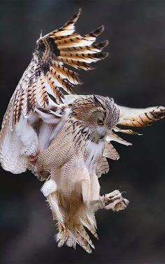 •••• The Owl in Flight ••••